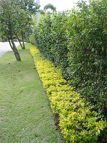 cerca de jardim barata : cerca de jardim barata:Modelos De Plantas Mais Usadas Na Decoração De Jardins Fotos