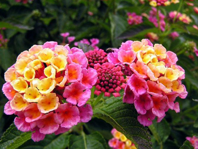 Primavera Flores para cultivar na estação  Casa e Decoração