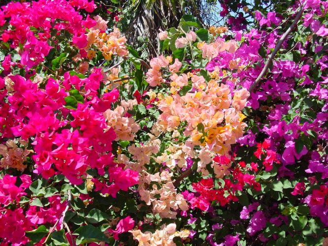 Primavera flores para cultivar na esta o casa e - Plantas de temporada primavera ...