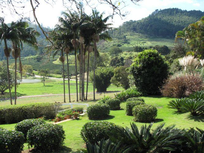 Visa geral do trabalho de paisagismo de Gilberto Elkis para uma fazenda em Bragança Paulita (SP). Sobre o gramado, arbustos podados, grupos de palmeiras e cicas