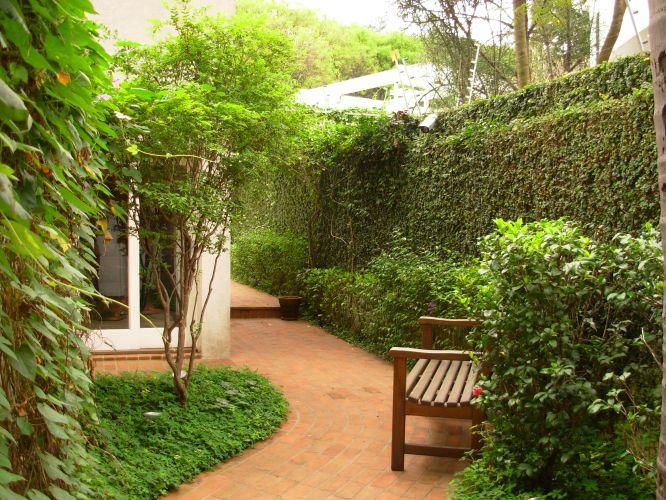 Jardim de entrada da casa, com corredor lateral, que dá acesso à piscina, à direita. A folhagem à esquerda, em primeiro plano é falsa vinha (Parthenocissus). A árvore é uma jabuticabeira (Myrciaria cauliflora), plantada em um canteiro forrada com grama do tipo amendoim (Arachis repens). À direita, atrás do banco, uma cerca viva de camélias (Camellia japônica). Rente ao muro, a cerca viva é de tumbérgia arbustiva (Thunbergia erecta) e a parede inteira é forrada com unha-de-gato (Uncaria tomentosa). Projeto do escritório paulistano Grama e Flor