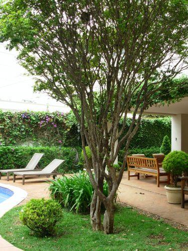 A jabuticabeira (Myrciaria cauliflora) foi plantada em frente à varanda da sala, no jardim junto à piscina (que tem borda de piso cimentício, da Solarium, e revestimento interno de pastilhas Jatobá). No canteiro, ao pé da árvore, o