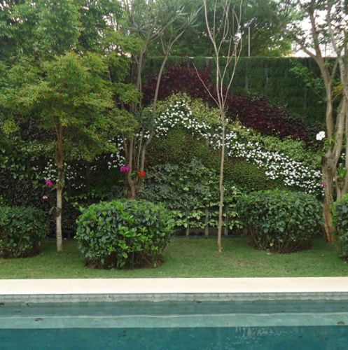 No jardim à margem da piscina, o paisagista Gilberto Elkis utilizou gardênias (Gardenia jasminoides) que, na primavera, exibem flores brancas perfumadas. Apreciadores de sol direto, os arbustos devem ser podados depois da floração. No projeto de Elkis, a espécie foi podada em formato de bola