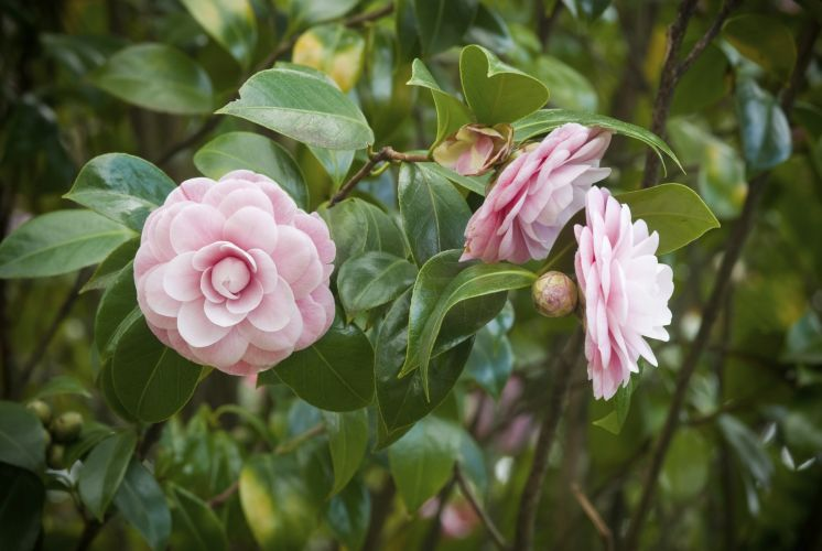 Veja algumas espécies de plantas que se dão bem no inverno  Casa e