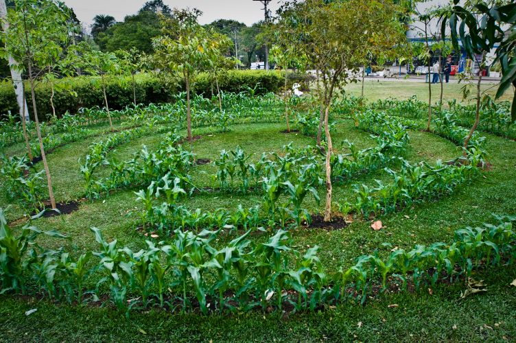 Ao todo, o evento tem nove jardins de 200 m, distribudos em torno da marquise projetada por Oscar Niemeyer, onde est localizado o Museu de Arte Moderna de So Paulo. Na foto, o jardim criado pelo paisagista francs Louis Benech. No formato de um labirinto, tem estrutura circular dividida por ps de milho, entremeados por rvores frutferas. No entanto, as rvores e plantas frondosas criam obstculos para o visitante, como num pomar que se fechasse sobre si mesmo, causando a sensao de estar perdido como nos antigos labirintos de plantas de castelos e afins