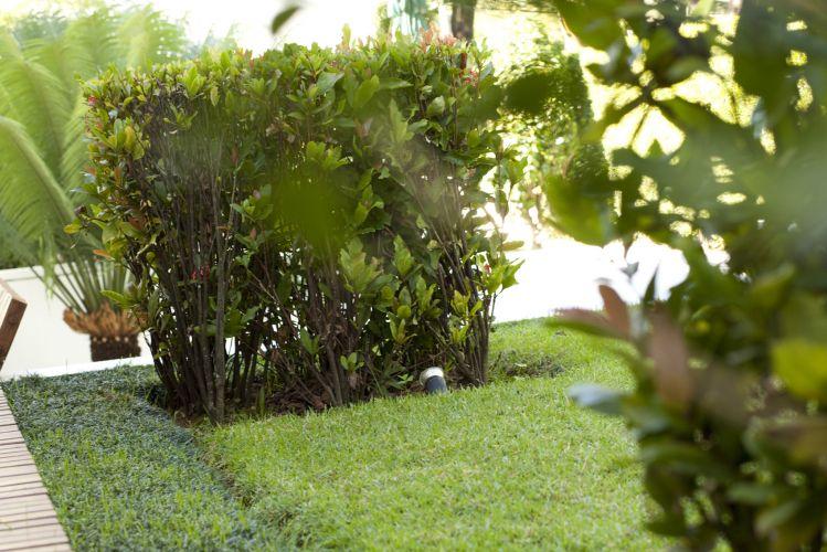 Maciço de ixorias (Ixora chinensis) plantados em tapete de grama esmeralda (Zoysia japônica) contornado com faixa de grama preta (Ophiopogon japonicus)