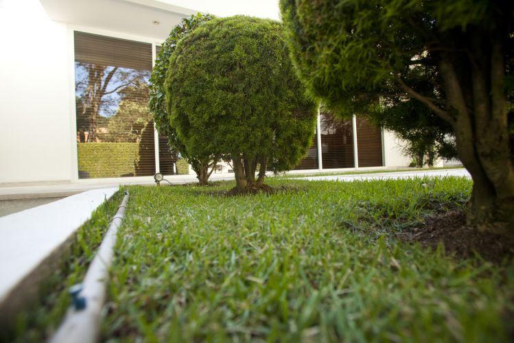 Detalhe das eugênias (Eugenia sprengelii) podadas na forma de bola, plantadas em meio à grama esmeralda (Zoysia japônica)