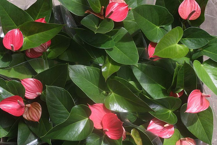 Plantas para jardim faceis de cuidar - Plantas d interior ...