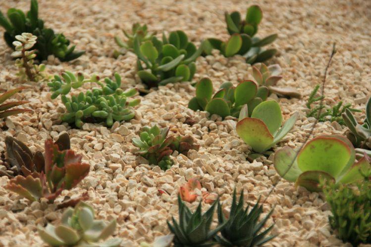Projetos e arranjos com plantas suculentas  Casa e Decoração  UOL