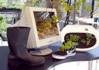 Faça de peças inusitadas, vasos alternativos para suas plantas - Fabiano Cerchiari/UOL