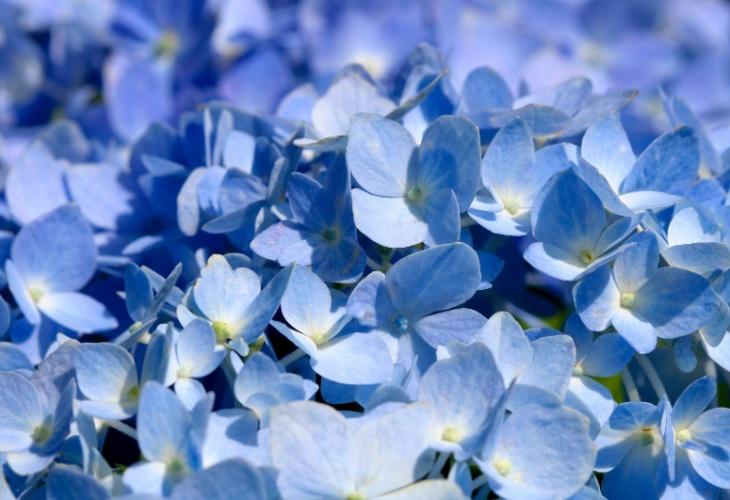 flores de jardim resistentes ao frio