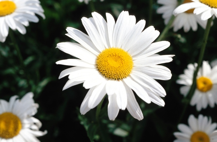 flores para jardim que aguentam sol:Conheça algumas espécies de flores e plantas floridas resistentes ao