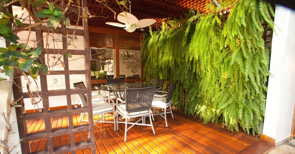Crie seu espaço verde com samambaias; saiba como cultiválas  Casa