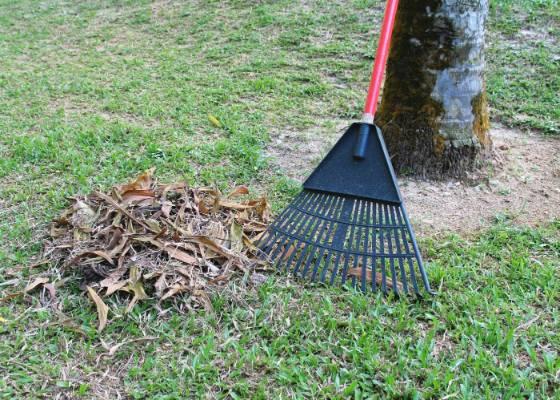 Depois e tirar as ervas daninha e cortar a grama, remova os restos com um ancinho ou um restelo: isso melhora a aera��o e a luminosidade, al�m, de diminuir a temperatura e umidade da grama, eliminando os fatores que facilitam o surgimento de doen�as