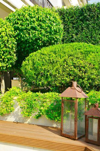 Detalhe da decoração do jardim elaborado pela paisagista Gigi Botelho, em um apartamento térreo, em São Paulo. As lanternas adornam a beira do SPA; ao fundo, rente ao muro, foi plantada murta (Murraya paniculata), o arbusto em formato oval é buxinho (Buxus sempervirens) e à esquerda, as árvores maiores, também esculpidas, são fícus (Ficus benjamina). A forração pendente é grama-amendoim (Arachis repens)