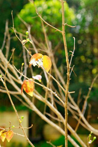 Detalhe da jabuticabeira (Plinia trunciflora), cultivada em vaso no jardim criado por Gigi Botelho na área externa de um apartamento térreo em São Paulo
