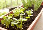 Passo a passo: aprenda a fazer uma horta orgânica em vaso - Fabiano Cerchiari/UOL