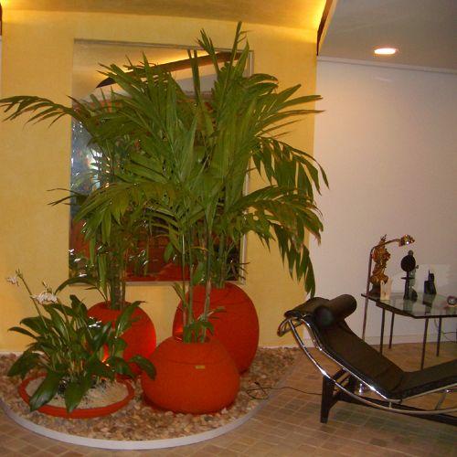 Plantas esp cies para cultivo em ambientes internos for Plantas para dentro de casa sombra