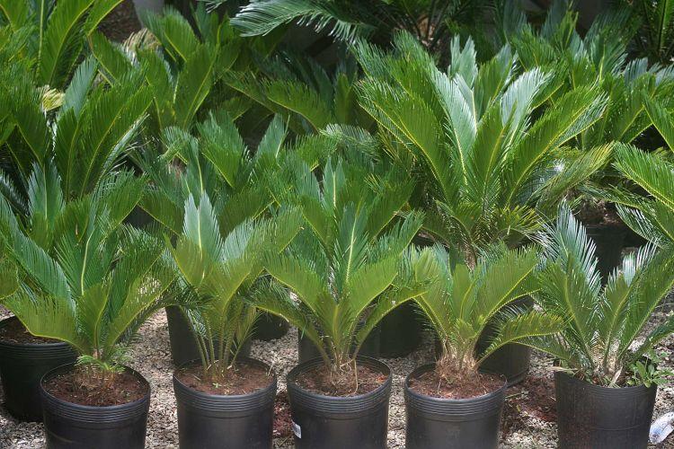 Praticidade plantas f ceis de cuidar garantem verde sem for Plantas para pleno sol