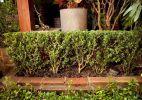 Poda ornamental: aprenda a dar uma forma harmoniosa às plantas - Fabiano Cerchiari/UOL