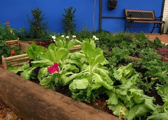 Curso vai abordar temas como nutrição ideal para as plantas e a forma adequada de plantio  - Greg Salibian/Folha Imagem