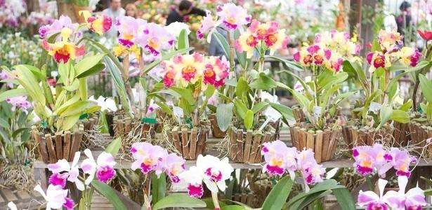 Orquídeas em exposição no Orquidário Morumby, que promove mostra durante o mês de maio - Divulgação