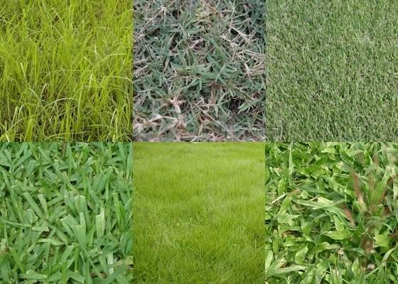 Cada tipo de grama compõe gramados de cor e textura diferente. Há um tipo mais indicado para cada uso e tipo de solo. Formar listras e xadrez também é um ótimo recurso de paisagismo