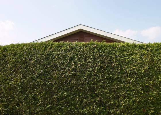 Econômica, a cerca viva garante isolamento visual com um ótimo efeito estético: antes de gastar um monte de cimento, pense se você não pode resolver seu problema com plantas