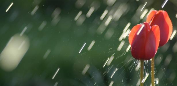 Água faz bem, mas água demais pode afogar a planta. Proteja seu jardim das chuvas de verão - Getty Images